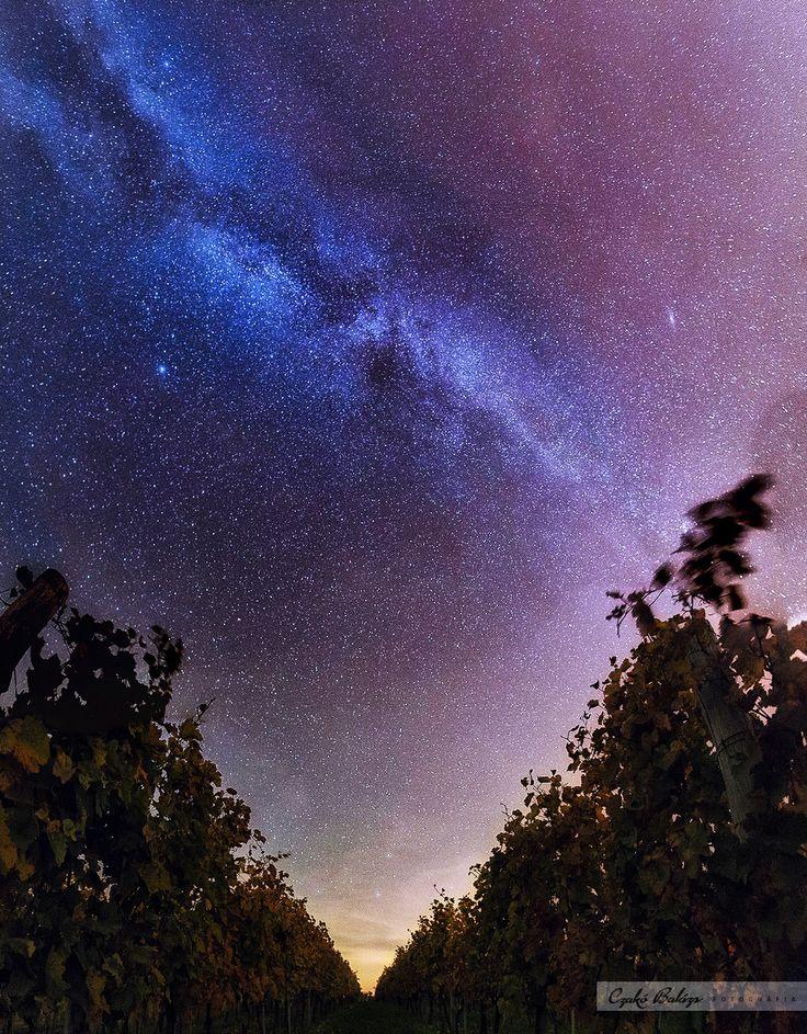 The Milky Way over a vineyard near Szekszárd.