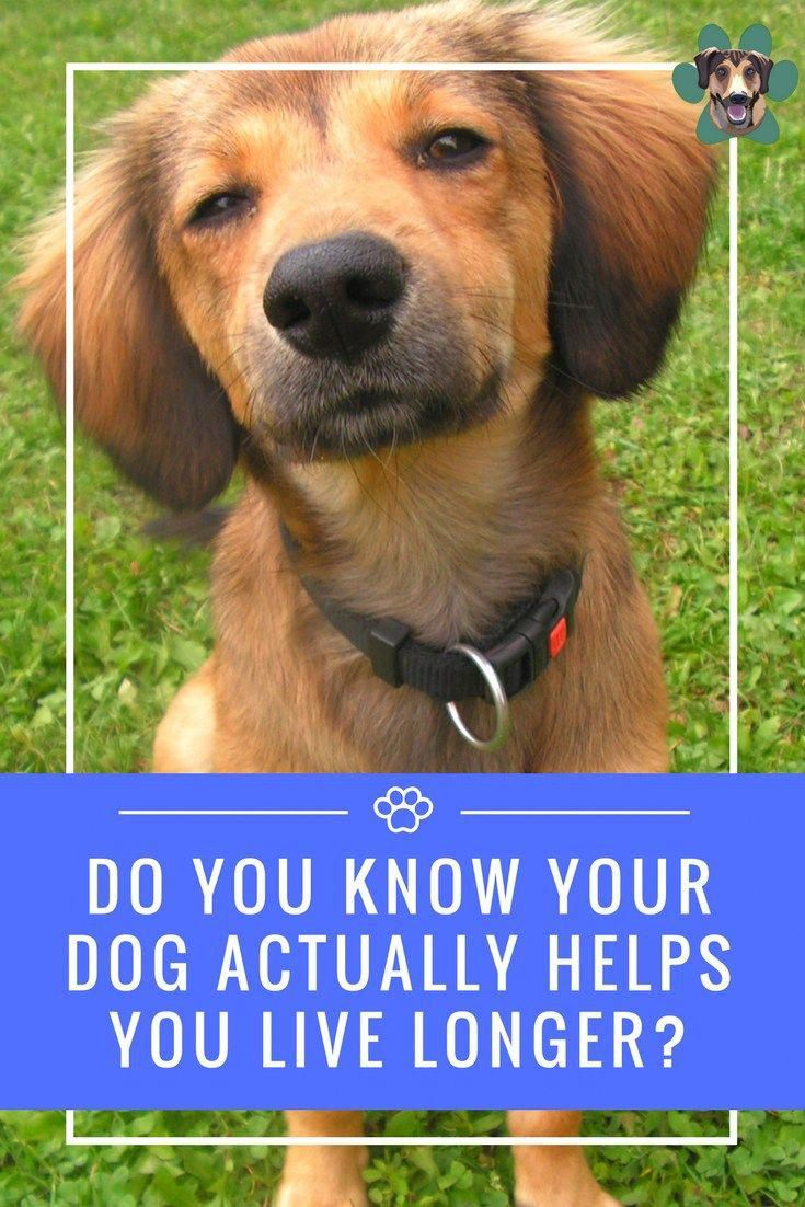 I Am Going To Share A Few Reasons Why Dogs Help You Live Longer