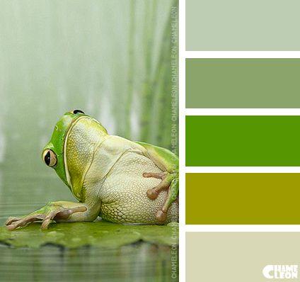 Harmonie vert rainette I Design I Couleur I Inspiration I Camaïeu I Peinture I