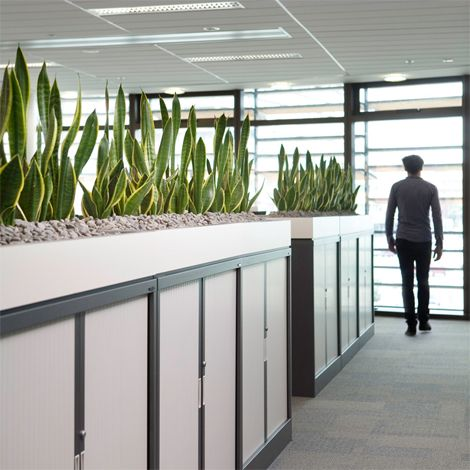 Open Plan Offices - indoor plants displays from Ambius ...