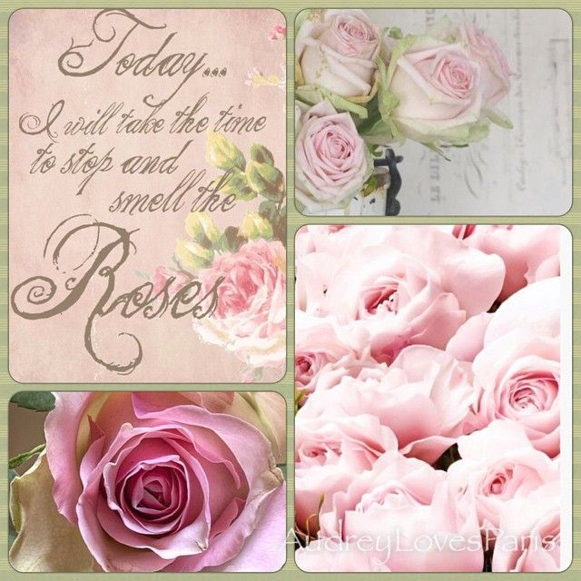 Take Time To Smell The Roses Quote: 627 Best Images About Quotes