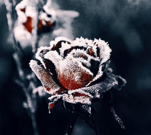 """secret–gardens: """" """""""