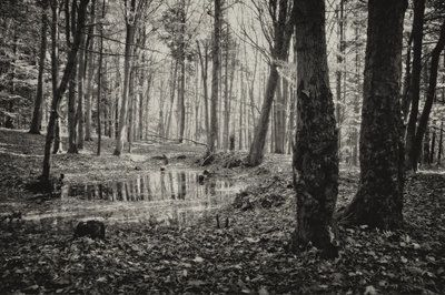 bwstock.photography - photo | free download black and white photos  //  #autumn #forest #lake