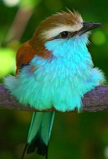 i love birds and blue  perfection