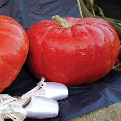 Cinderella Pumpkin Conventional & Organic