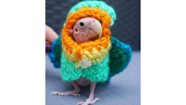 Un periquito sin plumaje recibe decenas de (mini) jerséis de sus followers…