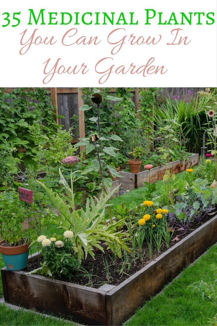 Grow a few of these medicinal plants in your garden: theyre beautiful, and youll have natural remedies at your fingertips http://medicinalplantsnews.blogspot.com.co/
