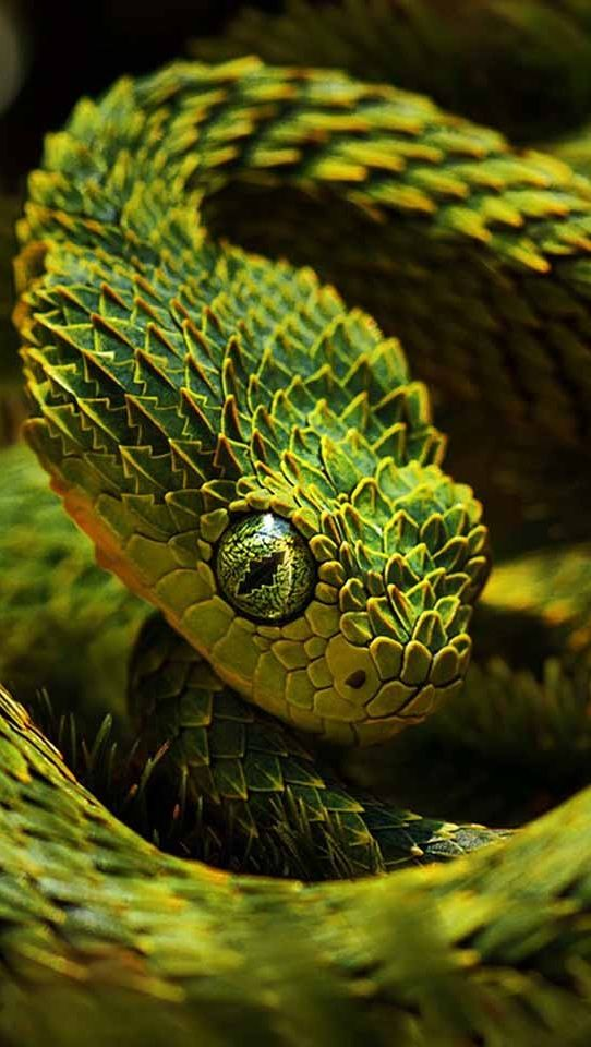 Cabeza serpiente dragón