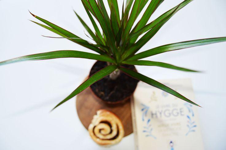 Le Hygge a débarqué chez nous cet hiver tel un tsunami ! Mais ce mode de vie peut être adopté toute l'année. Découvrez ma version du Hygge printanier ! #green  #plant #palm #Hygge #cinnamonrolls