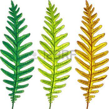hojas de otoño dibujo: hojas de helecho de verano y otoño de dibujo de acuarela, elementos del vector dibujado a mano Vectores