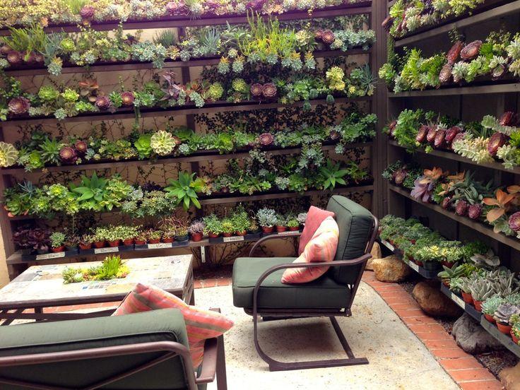 Succulent Cafe / Oceanside, CA   Garden: Succulents ...