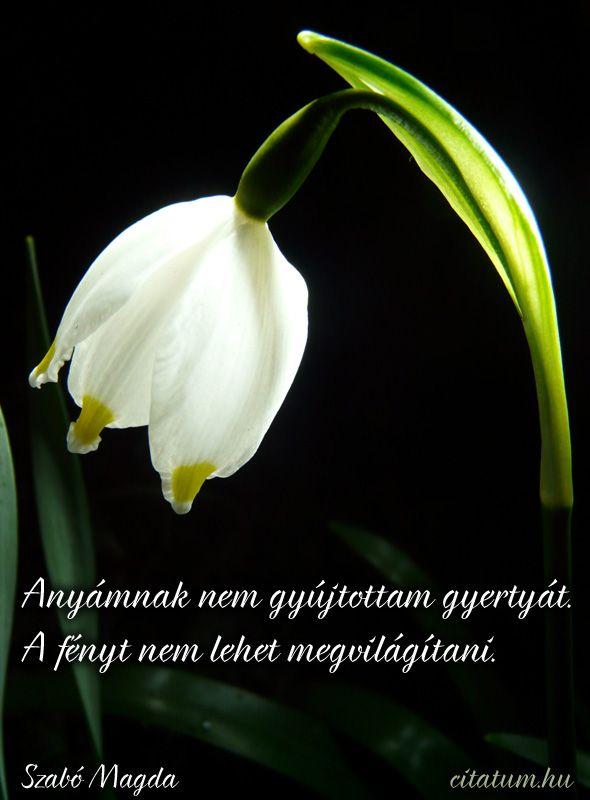 Szabó Magda idézete az anya hiányáról.