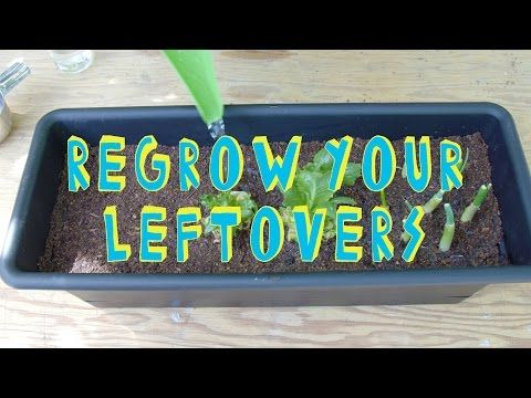 How to Regrow Your Leftovers! (Smart Life Hacks) - YouTube