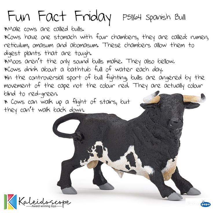 Fun Fact Friday Papo P51164 Spanish Bull.  Distributed by Kaleidoscope.