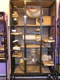How to find the right chinchilla cage. URL: http://chinchilla.co/  FB fan page: https://www.facebook.com/chinchilla.co