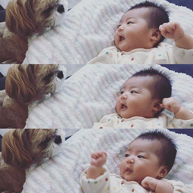 """. . . ひめ🐶来たら必死に """"あーうー""""って話しかけてる👶🏻😂 . . .#baby#instagram#instalike#followme#dog#ig_baby#mamanoko#2017_summer_baby部#愛犬#犬#わんこ #新米ママ#生後1ヶ月 #女の子ベビー#女の子ママ#新生児#親バカ#親バカ部#育児#子育て#ベビリトル#ママリ#ベビフル#コドモノ#8月生まれ#ママ友募募集#可愛い#母乳#ミルク#母乳育児"""