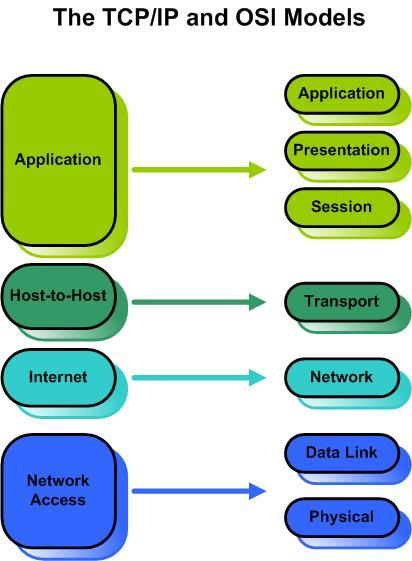the TCP/IP and OSI models