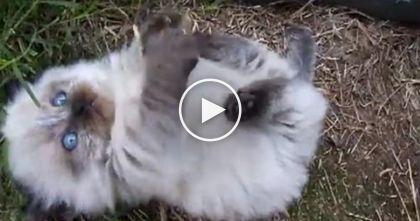 Fluffy Little Kitten ist im Begriff, Ihr Herz in Stücke zu schmelzen … Nur PREISLOS.   – Bookatrix