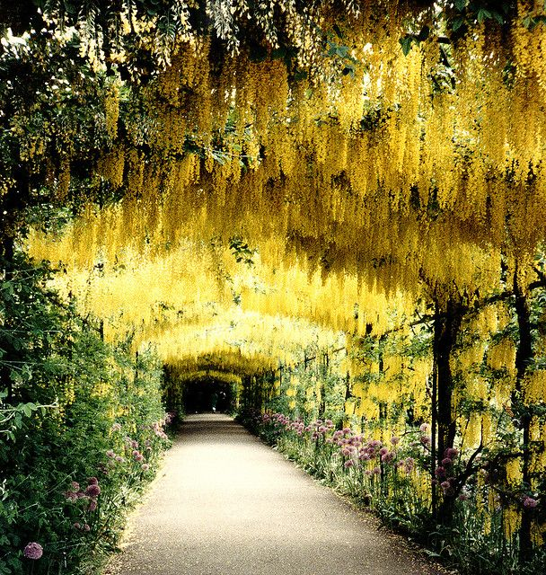 gardens of Henry Vlll's Hampton Court Palace