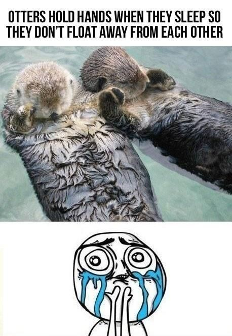 So so cuteOtters Holding Hands, Drift Apartments, So Cute, So Sweets, My Heart, Did You Know, Sleep, Sea Otters, Animal