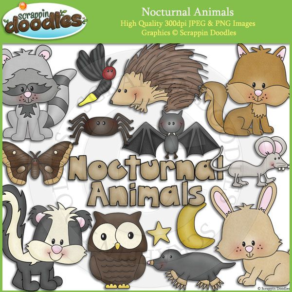 Nocturnal Animals | Scrappin Doodles Clip Art | Nocturnal ...