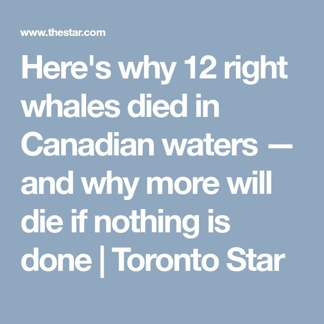 Here's why 12 right whales died in Canadian waters — and why more will die if nothing is done | Toronto Star