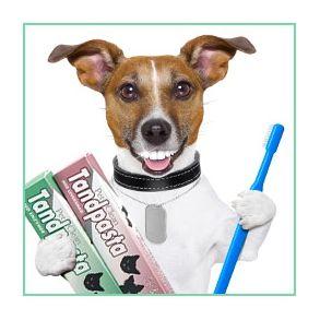 Tandpleje til hunde