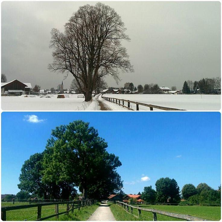 waiting for spring to come (hibernating meanwhile ) #winterwonderland #zima #czasemzimaczasemlato #hibernation #natureknowsbest #igersmunich #instanature #landscape #tree #contrast #snow