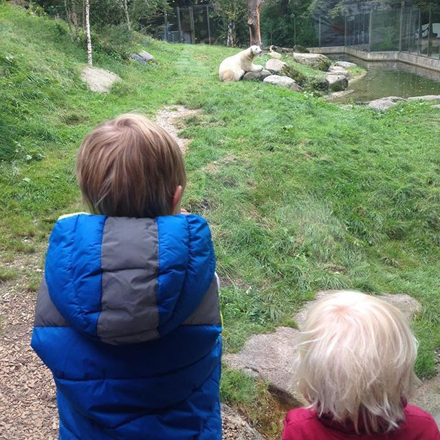 Heute endlich mal das neue #Eisbärengehege in #Hellabrunn angeschaut // Today we finally took a look at the new polar bear enclosure at Hellabrunn #zoo #münchen #lebenmitkindern #lifewithkids #boysmum #jungsmama