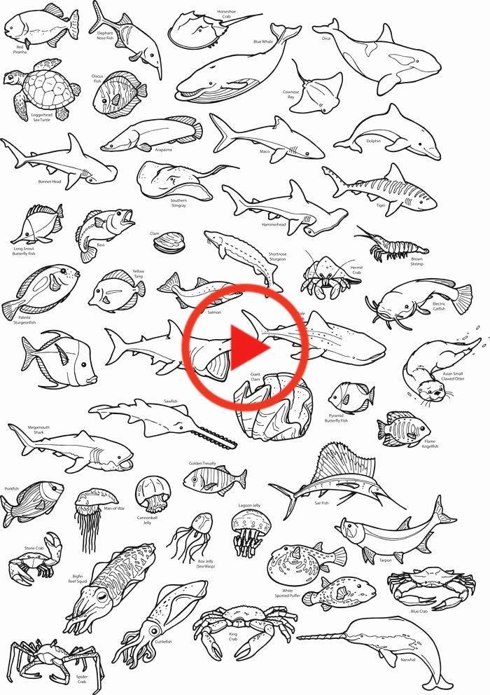 - Ocean Animal Coloring Book Inspirational Realistic Sea Creatures Coloring  Pages In 2020 Sea Animals Drawings, Ocean Drawing, Jellyfish Art