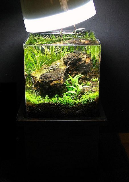 156 best images about planted nano aquariums on pinterest betta fish tank mini aquarium and. Black Bedroom Furniture Sets. Home Design Ideas