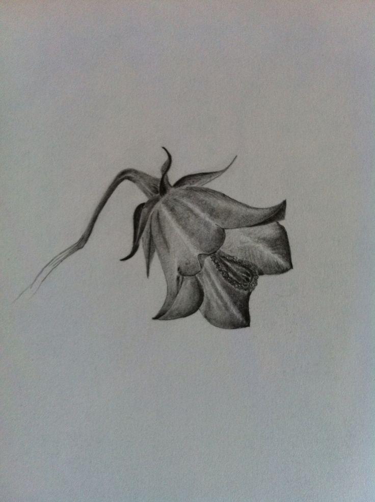 Glockenblume Bleistiftzeichnung | Grafik | Zeichnen ...