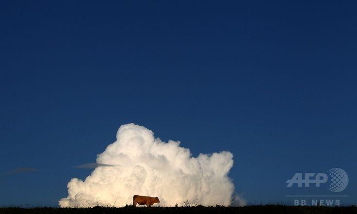 青空に積雲もくもく、ドイツの牧草地 国際ニュース:AFPBB News