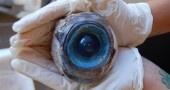 Il mistero dell'occhio gigante sulla spiaggia
