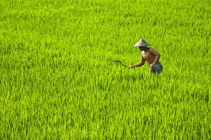 Photo Farmer in Bali, Indonesia by ting pisit on 500px