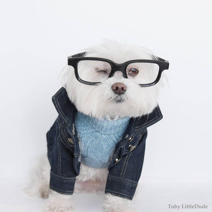 12 Dog Clothing Brands That'll Have Your Pup Winning Best Dressed - Barker from InStyle.com