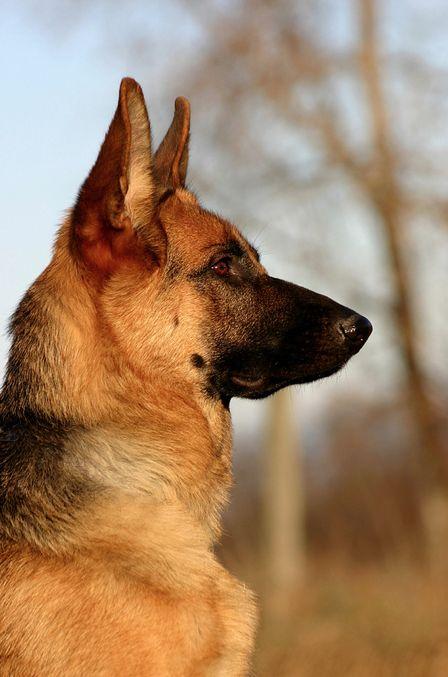Perro Guardián                                                                                                                                                     Más