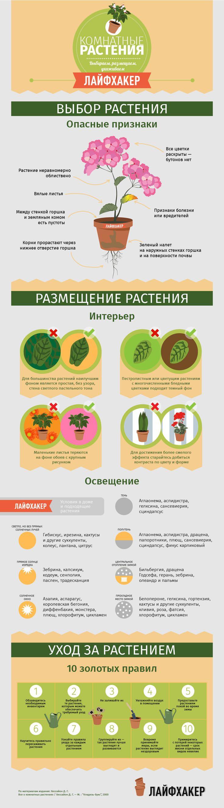 Комнатные растения.  Выбираем, размещаем, ухаживаем