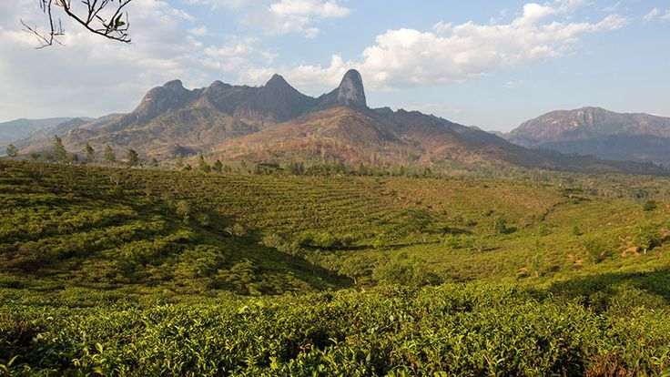 Practicing what you preach: Mozambique's natural resource management
