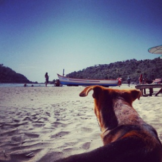 Life of a street dog in Goa