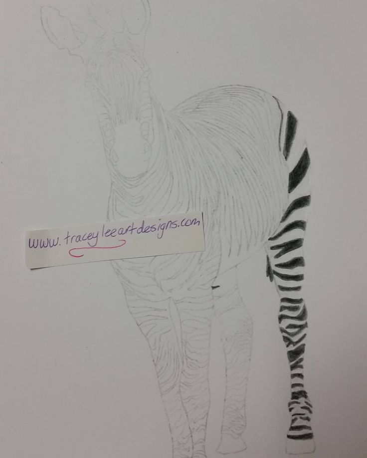 Started on a zebra today. Going to be a slow process with all those stripes . #art #colouredpencils #coloredpencil #draw #illustrate #drawing #zebra...