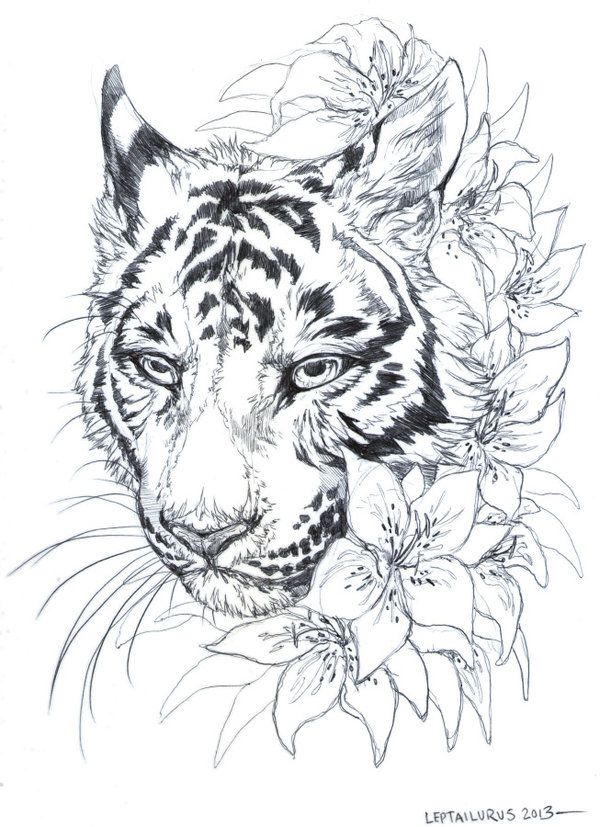 TIGER...LILY hahaha
