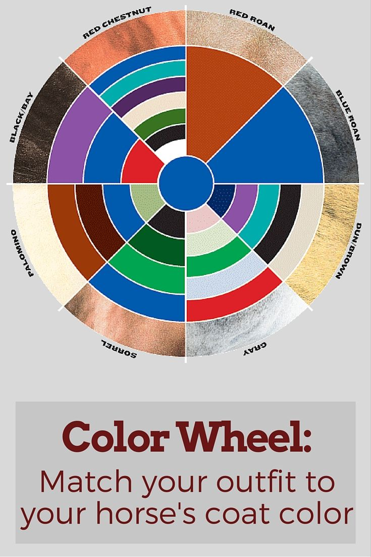 In the horse show world, your outfit can make or break your score. Make sure your horse show clothes are on point with this color wheel where you can match your horse's coat color with the corresponding clothing color.