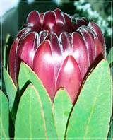 экзотический фрукт аки фото (700x525, 232Kb)