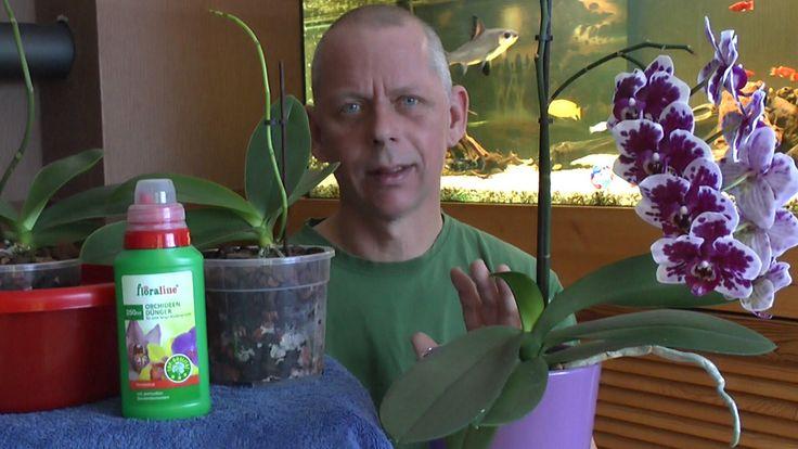 Orchideen einpflanzen, umtopfen ganz einfach