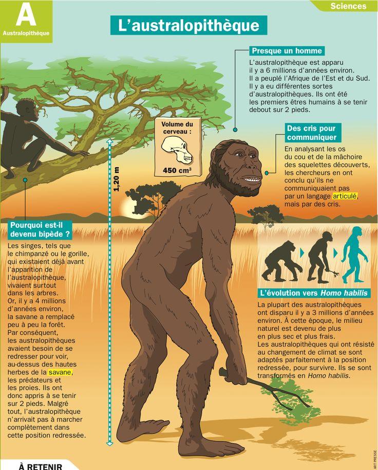 Fiche exposés : L'australopithèque