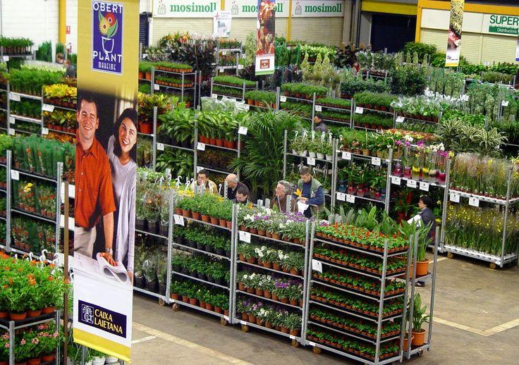 THM - Tecnologías de la Horticultura Mediterránea: Los viveros para plantas y árboles ornamentales: las plantas en maceta para la casa y el paisajismo moderno
