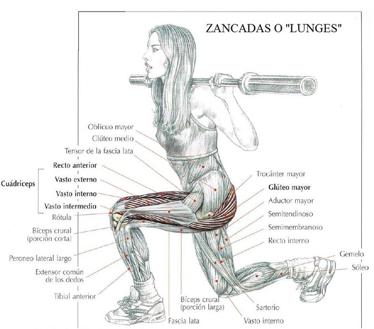 Para tener unos glúteos firmes y un trasero bonito es necesario tonificar los músculos glúteos, aquí te mostramos los mejores ejercicio...