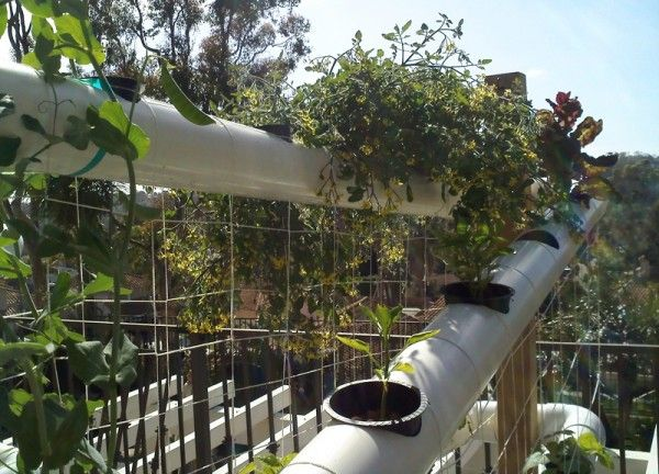 Verical Garden Plants
