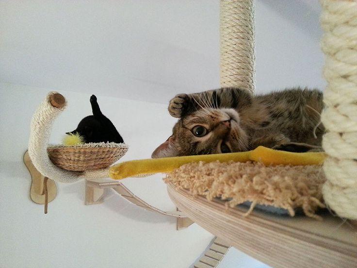 une piece en aire de jeux pour chat 6   Transformer une pièce en aire de jeux pour chat   photo meuble jeu image Goldtatze chat aire de